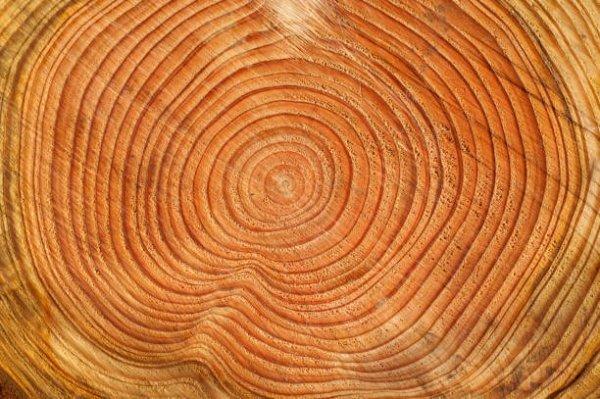 Lumber Density